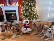 """Santa & His """"Golden"""" Reindeer"""