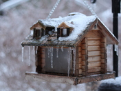 Bird house encased in freezing rain