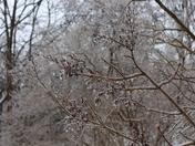 Nature's ice sculpture