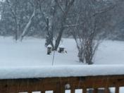 birds like the feeder still snowing