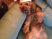 Tucker waiting on Santa