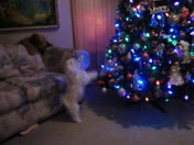 Marley Enjoying The Christmas Tree