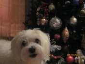 Marley Loves Xmas Time