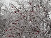 December 2013 Ice Storm