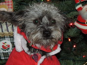 Zoey keeping watch for Santa in her cozy hooded Christmas suit.