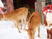 Reindeer Tryouts