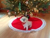 Merry Christmas from Chloe Barton