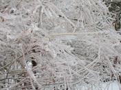 Ice storm GTA: the beauty