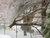 Ice storm 2013 GTA
