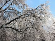 GTA ice storm: Sparkling branches