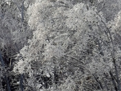 """""""Frosted Branches"""""""