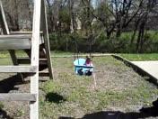 Dog In Swing