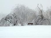 Ice Storm Isolation