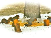 8 WINTER SQUIRRELS