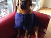 Geno staying warm!