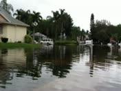 Meadow Blues - Flooding