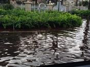Boynton Beach flooding pictures