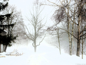Land of Fog