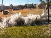 ice coated plants