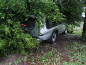 another picture of tree and truck