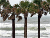 Stormy ocean view through palm trees