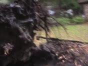 Bad weather = fallen tree