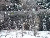 Giant snow flakes-2