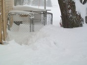Snow for dogs