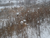Brush on the side of the road looks like its catching snowballs
