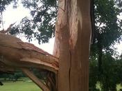 Thomas Mitchell park lightning strike