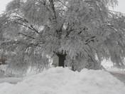 Breda Iowa Ice Storm