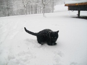Cat in the snow!