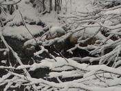 Snow day 2 026.JPG