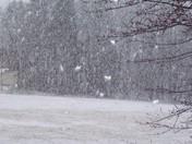 March 2009 Snow