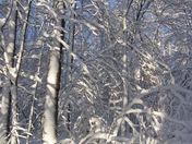 Back yard beautiful snow 3-2-09