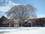 Tree at church