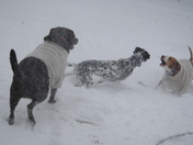 ENJOYING A GAME OF TAG WHILE THE PARENTS SHOVEL :-)
