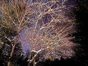 Apple Tree Trail