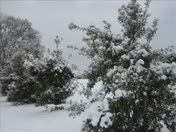 March 2, 2010 snow