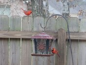 Cardinals at Lunch