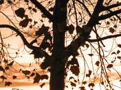 Autumn in Santa Cruz