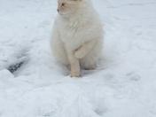 Sleet/snow 2014