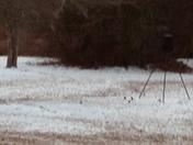 The bird are enjoying the ice on ground