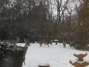 Deer Parade in Elm Grove