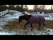 Horses pick the Super Bowl