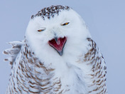 The Evil Laugh of a Snowy