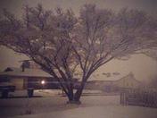 Snow in Rio Rancho