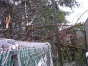 Trees impale RV's at dealership