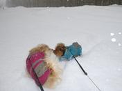 Feb 5 2014 Winter Storm