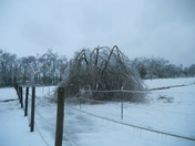 my poor willow tree